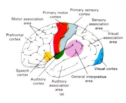 neurology of sensory integration the karg academy